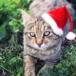 Merry Xmas to all