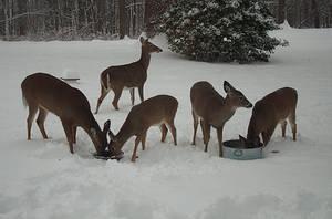 The Deer by mysticmoors