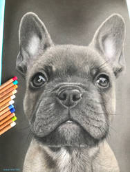 AWAFrenchBulldog3 by grrromit