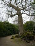 Scotney Castle 13