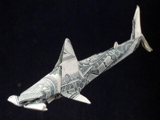 One Dollar Hammer-head Shark