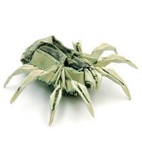 Two Dollar Spider by orudorumagi11