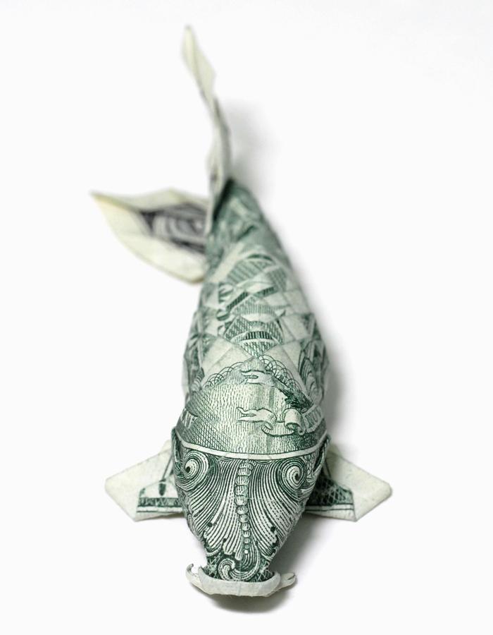 One dollar Koi_ new version by orudorumagi11