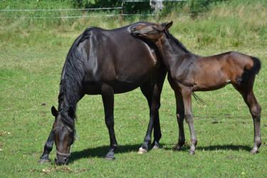 Foal Stock by MissJaneDark