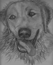dog yakky