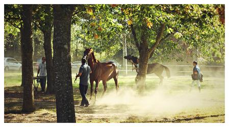 Horse dust