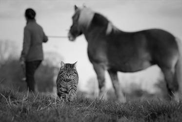 The Cat, The Horse and The Human by sourpepper