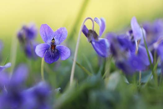 Violette 2
