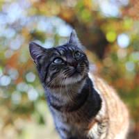 Bokeh Cat
