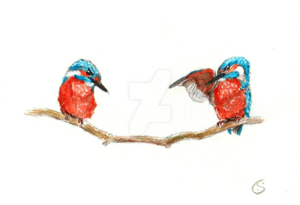 Kingfishers by CharlieK-33