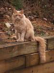 My Cat Carmel!