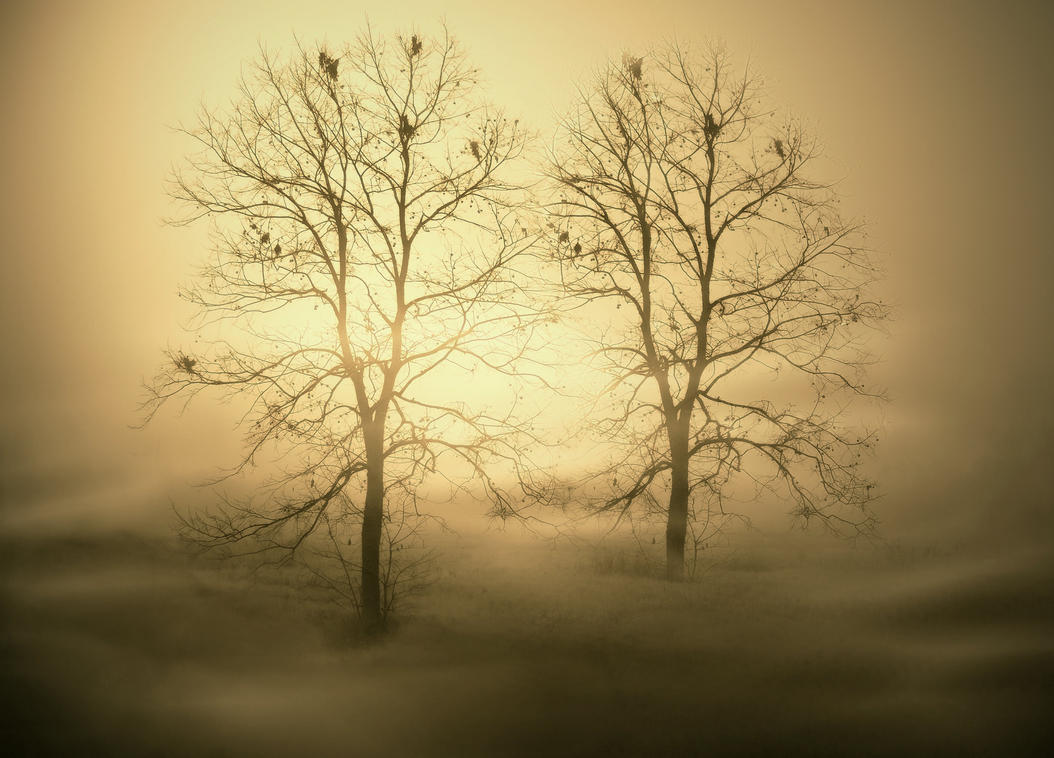 Lovers In The Mist by charlena1