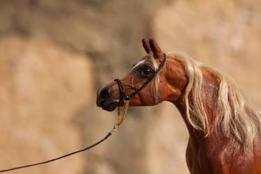 Arabian Show Halter by PegasusCreations