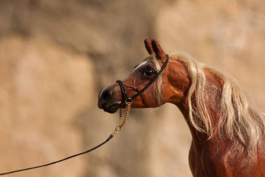 Arabian Show Halter