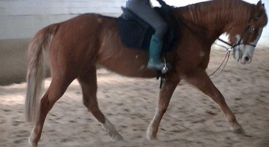 RiverView-Equestrian's Profile Picture