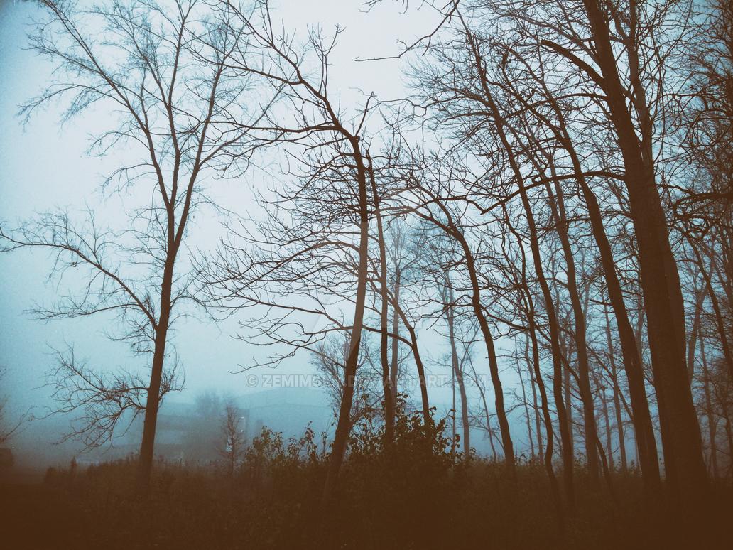 Allons-y dans les bois by zemimsky