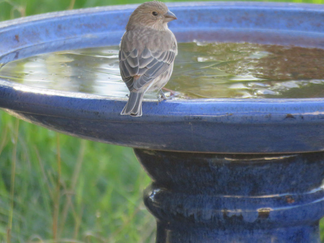 Visitor At The Birdbath by Meeshellz41