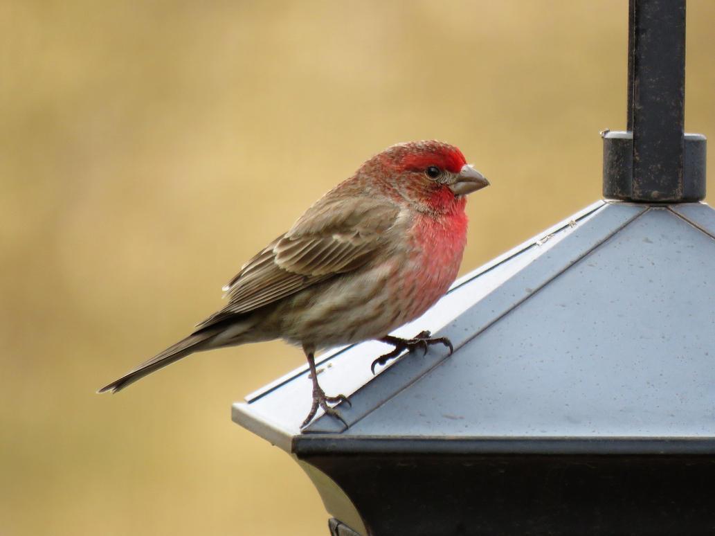 Little Bird by Meeshellz41