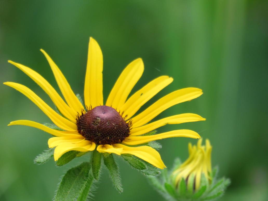 Beautiful Little Flower by Meeshellz41