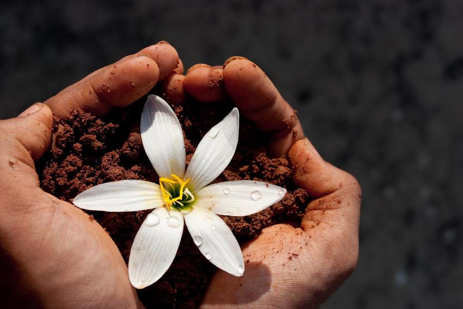 Earth love by Naxal