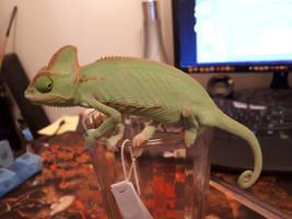 Baby_the_Chameleon_adolescent
