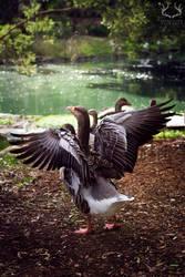 Wings by deerstalkerpictures
