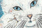 Mother and baby cat  white  watercolor