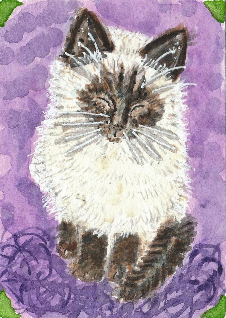Baby Kat  kitten  watercolor aceo by tulipteardrops