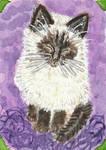 Baby Kat  kitten  watercolor aceo
