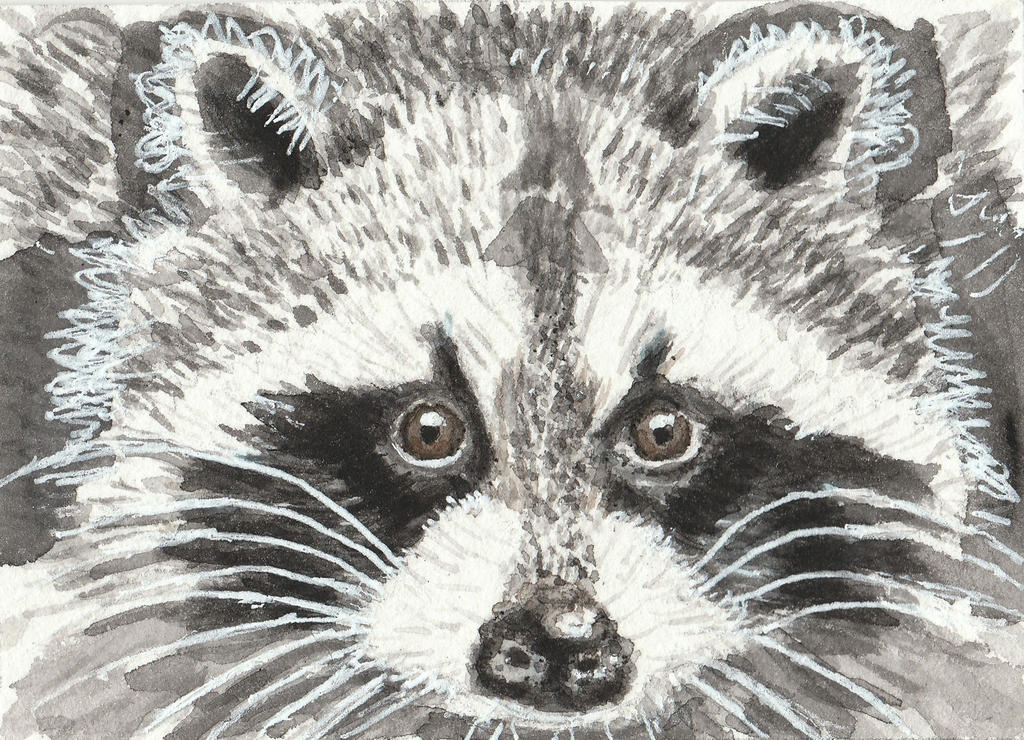 Raccoon face watercolor aceo painting by tulipteardrops on