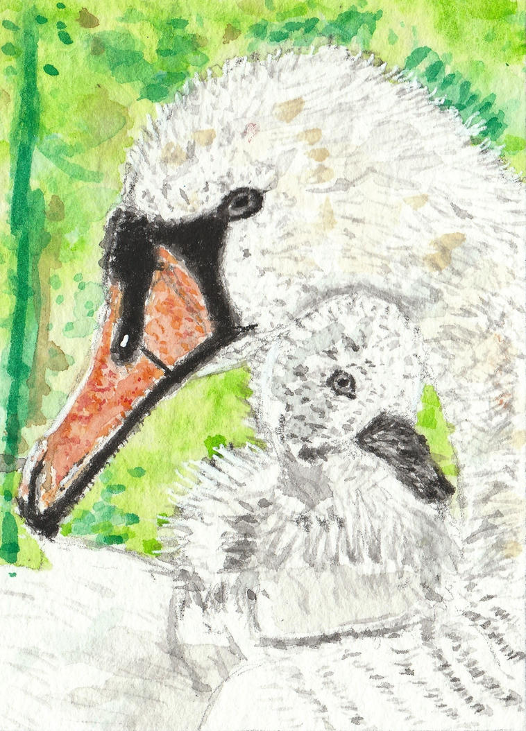 Mother  Swan and baby watercolor  aceo painting by tulipteardrops
