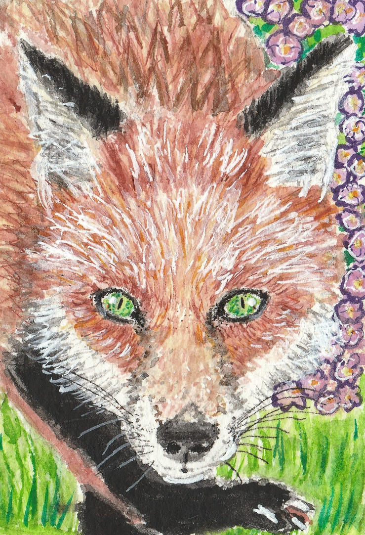 Fox watercolor aceo painting by tulipteardrops