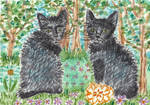 Twin kittens black cat watercolor aceo painting by tulipteardrops