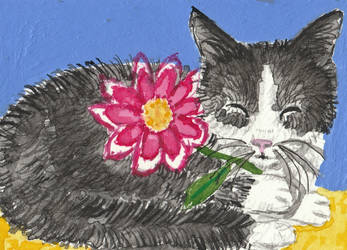 cat  with  flower  watercolor acrylic aceo by tulipteardrops
