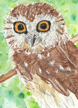 Owl bird  watercolor ACEO original painting
