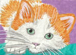 Orange and white kitten cat aceo watercolor paint