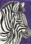 Zebra face aceo painting