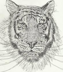 Tiger pen drawing