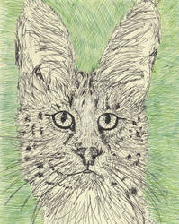 Serval pen drawing