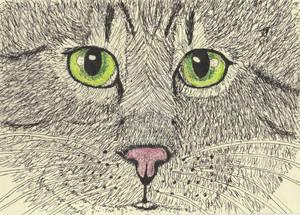 cat face pen drawing colored pencil