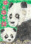 Panda bear  and baby watercolor aceo painting