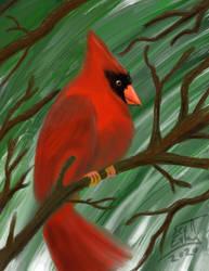 Paint practice in pro create