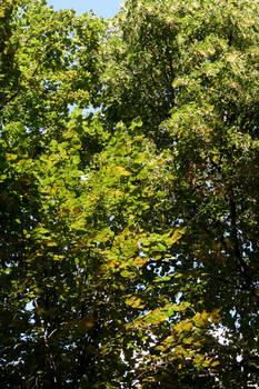 Tree-Leaf Texture