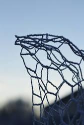 Frozen wire hawk