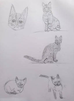 Day 23: 5 Attempts at Drawing Different Cats