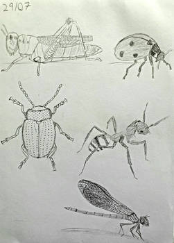 Day 29: 5 Drawings of Different Insects