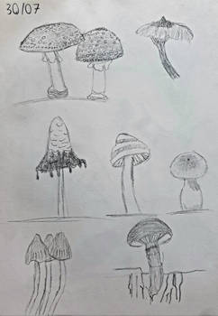 Day 30: 7 Drawings of Different Mushrooms