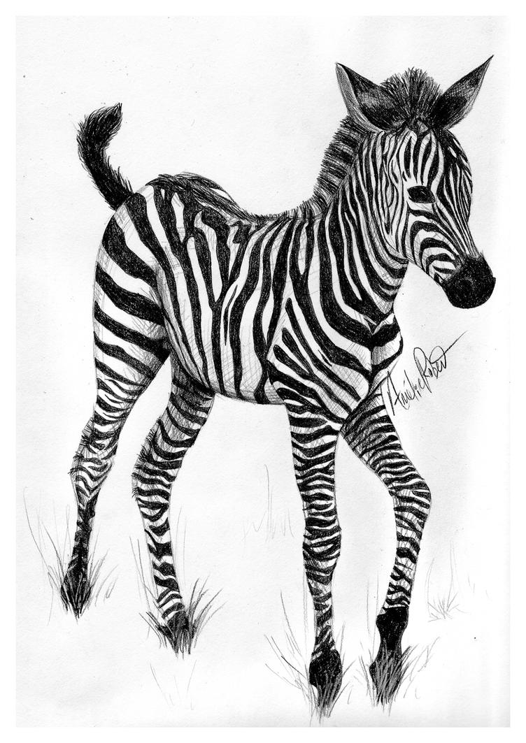 zebra drawing - photo #30