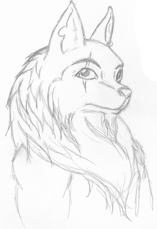 Anthro Wolf Male Anthro Wolf Head by