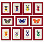 Super Bug Collection